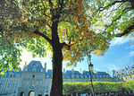 The changing colors of autumn on a chestnut tree in the Place des Vosges, with the Queen's Pavilion in the background.
