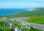 In April, wildflowers are abundant along Pierce Point Road, at Point Reyes National Seashore.