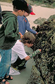 School boys, on a field trip, eye the rich aquatic life at Point Pinos Beach - famous for its tidepools - outside the town of Pacific Grove in California's scenic Monterey Peninsula.