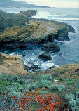 Surf and winds have pounded the reddish headlands of Point Lobos State Reserve for a millenia, in the scenic Monterey Peninsula.