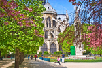 Cherry blossoms and tulips bloom in Square Jean XXIII outside Notre Dame Cathedral.