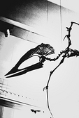 "Black and white posterized ""airborne"" Pterosaur skeleton;  - a flying reptile that fluorished during the great age of dinosaurs; American Museum of Natural History."
