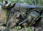 An American Marine Corps WWII tank lies upside down in the jungle of Peleliu where it was blown up during the battle in September 1944.