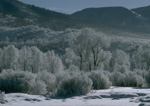 Frost ladened willows and cottonwoods along Walton Creek, Steamboat Springs Colorado