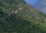 Terraced farmland near village of Dhunche Nepal north of Kathmandu
