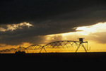 Storm clouds brew over a Yuma County  Colorado farm land using circular irrigation