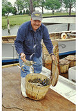 Fisherman shows off blue crab catch at Tilghman Island harbor, Maryland