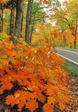 Road in Keweenaw Peninsula, Michigan