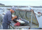 Fisherman cleaning Abalone in Crescent City Harbor, California