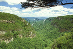 View from the Rim Trail, Cloudland Canyon State Park, Cooper Heights, Georgia