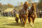 Horse pulling contest, Blue Ridge Folk Life Festival, Ferrum, Virginia