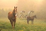 Horses in Fog, South Kirby, Vermont