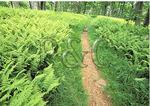 Appalachian Trail, Hogback Ridge, Shenandoah National Park, Virginia
