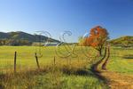 Farm Lane In Field, Madison County, Virginia