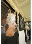 Curious Horse, Loudoun County, Virginia