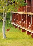 Visitors and Deer, Skyland Lodge, Shenandoah National Park, Virginia