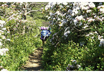 Hikers in Mountain Laurel on the Appalachian Trail in Shenandoah National Park, Virginia