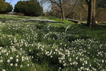 Field of Flowers, State Arboretum of Virginia, Boyce, Virginia