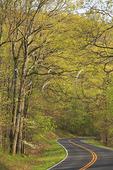 Skyline Drive, Calf Mountain Area, Shenandoah National Park, Virginia