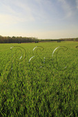 Union Lines, Malvern Hill, Richmond National Battlefield Park, Virginia