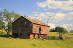 Sheep and Barn, Swoope, Virginia
