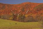 Fox Hunt, Swoope, Virginia