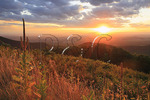 Mullein at Sunset, Near Turk Mountain, Shenandoah National, Park Virginia, Virginia
