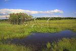 Pond, Big Meadows, Shenandoah National Park, Virginia