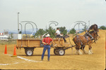Backing Up, Draft horse show at County Fair, Rockingham County, Shenandoah Valley, Virginia