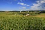 Corn Field in the Shenandoah Valley of Virginia