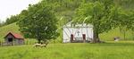 Sheep and Church, Western Highland County, Virginia