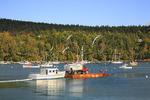 Beal and Bunker Ferry, Northeast Harbor, Mount Desert Island, Maine