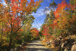 Carriage Road near Upper Hadlock Pond, Acadia National Park, Maine