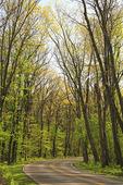Skyline Drive, Lewis Mountain Area, Shenandoah National Park, Virginia
