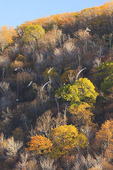 Fall Foliage, Browntown Overlook Area, Shenandoah National Park, Virginia