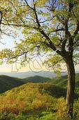 Brown Mountain Overlook, Shenandoah National Park, Virginia