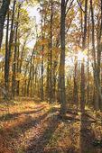 Appalachian  Trail, North RT 211, Shenandoah National Park, Virginia