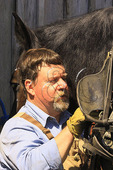 Removing Harness from Percheron Horse, Middlebrook, Virginia