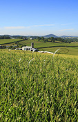 Corn Field, Dayton, Shenandoah Valley of Virginia