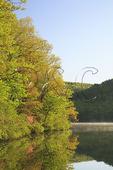Pink Azalea, Sherando Lake, George Washington National Forest, Virginia
