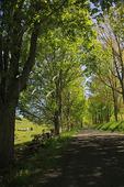 Road in Western Highland County, Virginia