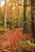 Trail at Echo Lake, Franconia Notch, White Mountains, New Hampshire
