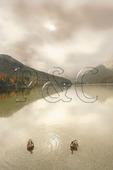 Ducks on Echo Lake, Franconia Notch, White Mountains, New Hampshire