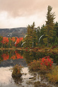 Lilly Pond, Kancamagus Highway, New Hampshire
