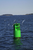 Channel Marker, Port Clyde, Maine