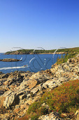 Tour Boat Passes Great Head, Great Head Trail, Acadia National Park, Maine
