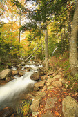 Hiking Trail Beside Jordan Stream, Acadia National Park, Maine
