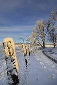 Winter Morning, Swoope, Virginia