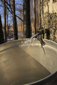 Maple Sugar Bucket, Doe Hill, Virginia
