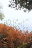 Ferns, Blue Mountain Lake, Adirondacks, New York